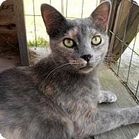 Adopt A Pet :: Dawn - Siren, WI