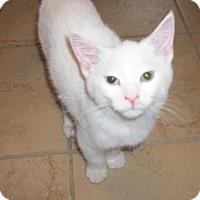 Adopt A Pet :: Belden - Lacon, IL