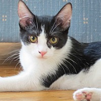 Adopt A Pet :: Kamilah - Cumberland and Baltimore, MD