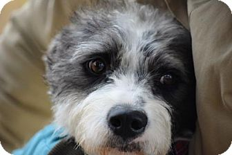 Terrier (Unknown Type, Medium) Mix Dog for adoption in Brooklyn, New York - Finn Wolfhard