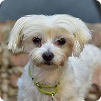 Adopt A Pet :: NOODLE - Marina Del Ray, CA