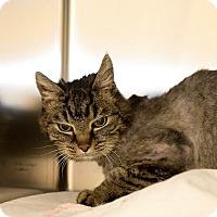Adopt A Pet :: Mattie - Schererville, IN