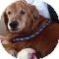 Adopt A Pet :: Tasha - Denver, CO