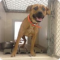 Adopt A Pet :: Terra - Lancaster, VA