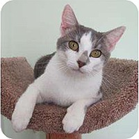 Adopt A Pet :: Oak - McDonough, GA