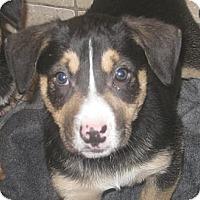 Adopt A Pet :: Oakley - Chicago, IL