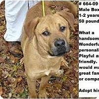 Adopt A Pet :: # 664-09 @ Animal Shelter - Zanesville, OH