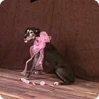 Adopt A Pet :: Ruthie - O'Fallon, MO