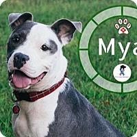 Adopt A Pet :: Mya - Jackson, TN