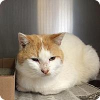 Adopt A Pet :: Barney - East Brunswick, NJ
