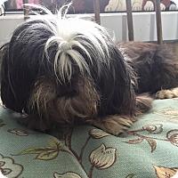 Adopt A Pet :: Huslu - Lewisburg, TN