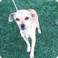 Adopt A Pet :: Freya - Las Vegas, NV