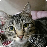 Adopt A Pet :: Lucy - Berkeley Hts, NJ