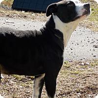 Adopt A Pet :: Daisy - Lewisburg, TN