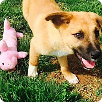 Adopt A Pet :: Lucky Charm - Christiana, TN