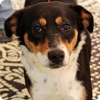 Adopt A Pet :: Prell - Yardley, PA