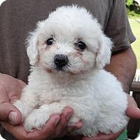 Adopt A Pet :: PIERRE - Wheeling, WV