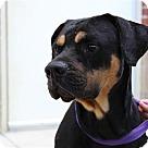 Adopt A Pet :: Atticus