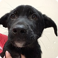 Adopt A Pet :: Axle - Fort Collins, CO