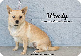 Pomeranian Mix Dog for adoption in Modesto, California - Wendy