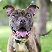 Adopt A Pet :: Rusty - Reisterstown, MD