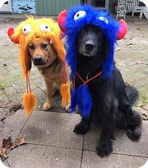 German Shepherd Dog/Cattle Dog Mix Dog for adoption in Baltimore, Maryland - Princess