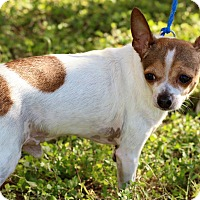 Adopt A Pet :: Brother - Brownsville, TX