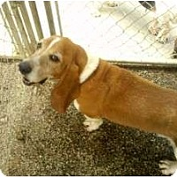 Adopt A Pet :: Maxx - Acton, CA