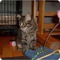 Adopt A Pet :: Midge - Milwaukee, WI