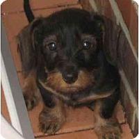 Adopt A Pet :: Baby Roscoe - Staunton, VA