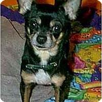 Adopt A Pet :: Dewey - dewey, AZ