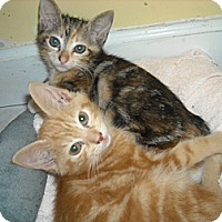 Adopt A Pet :: Ginger & Zee - Arlington, VA