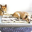 Adopt A Pet :: Phoebe Buffay