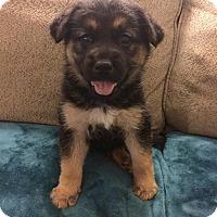 Adopt A Pet :: Grace - La Quinta, CA
