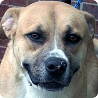 Adopt A Pet :: Buster - Germantown, MD