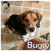 Adopt A Pet :: Bugsy - Pittsburgh, PA
