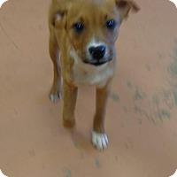 Adopt A Pet :: Molly...PRECIOUS MOLLY - Tunica, MS