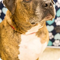 Adopt A Pet :: Tigger - Round Lake Beach, IL