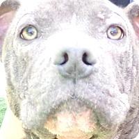 Adopt A Pet :: Asia - Chula Vista, CA