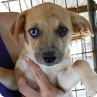 Adopt A Pet :: Clio - Gainesville, FL