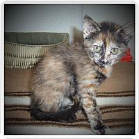 Adopt A Pet :: SYDNEY - Medford, WI