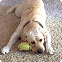 Adopt A Pet :: Bogey bonded with Sissyy - Las Vegas, NV