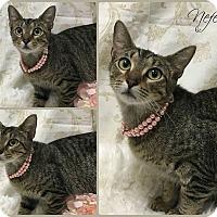 Adopt A Pet :: Nefertiti - Joliet, IL