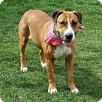 Adopt A Pet :: Toogie - Smithtown, NY