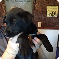 Adopt A Pet :: Tank (Wendy- Blossvale) - Blossvale, NY