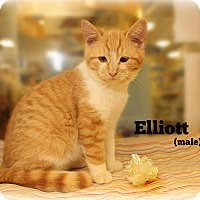Adopt A Pet :: Elliott - Glen Mills, PA