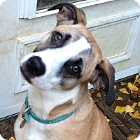 Adopt A Pet :: Lilly Will U Be Her Hero? - Olive Branch, MS