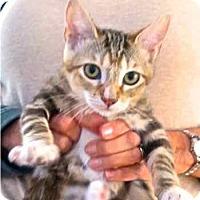 Adopt A Pet :: Kangaroo - Davis, CA