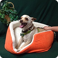 Adopt A Pet :: Blade - Tehachapi, CA