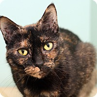 Adopt A Pet :: AGNES - Royal Oak, MI